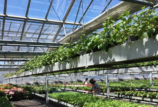 발달장애인의 치유를 위한 농업, 스마트팜.