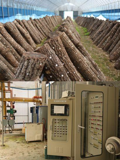 전통적인 버섯농법(위)과 첨단 스마트팜 시설.