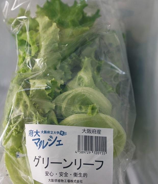 식물공장에서 생산된 양상추. 가격은 한 봉에 150엔이다.