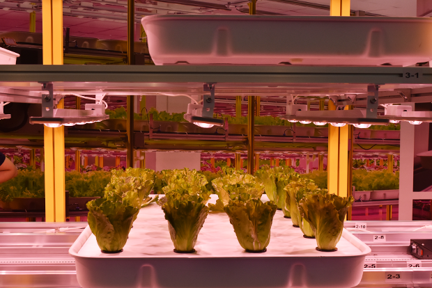 수직농장에서 엽채소를 키우기 쉽도록 모듈화된 재배장치와 엘이디 조명.