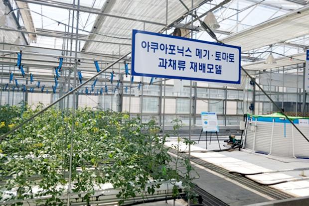 친환경 농업 기술로 각광받고 있는 아쿠아포닉스 (출처 : 경기도농업기술원)