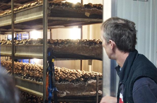 한창 버섯이 자라나고 있는 1차 수확기 유닛을 보여주는 에드워드씨.