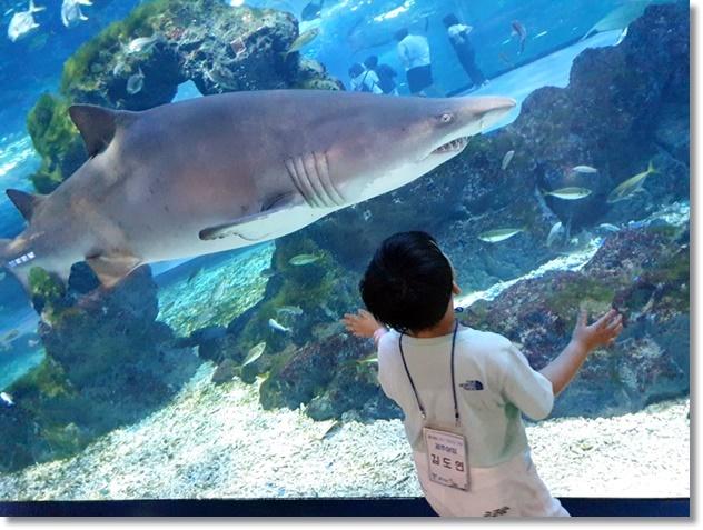 눈앞에 지나가는 거대한 바다생물에 감탄하는 도연이