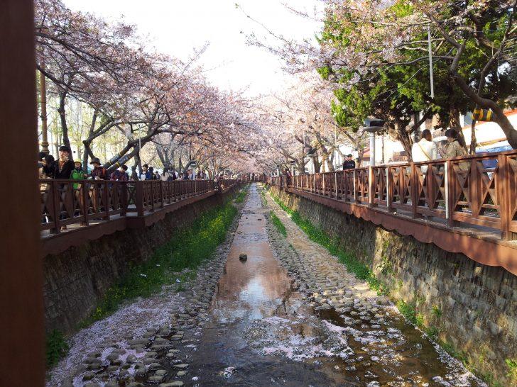 ▲ 로망스다리에는 데크로가 있어 휠체어로 편하게 이동하며 벚꽃을 감상할 수 있다.