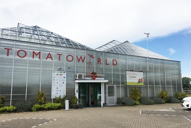 네덜란드 80여 종의 토마토를 재배하는 토마토월드 전경