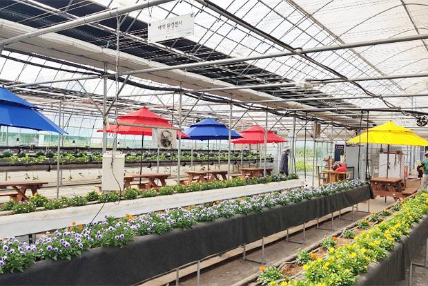 다양한 꽃과 작물이 가득한 푸르메스마트팜 서울농원
