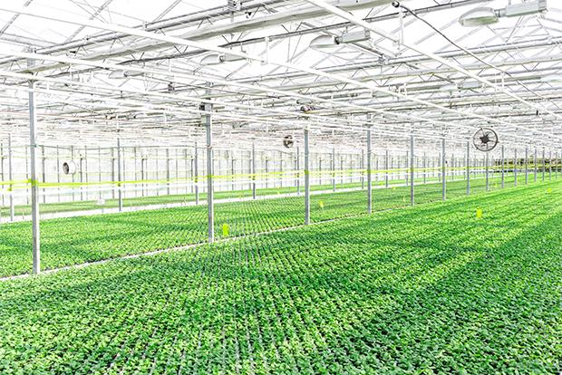 기존 농업에 비해 생산성이 높은 스마트팜