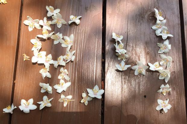 꽃잎으로 표현한 '효니'라는 두 글자