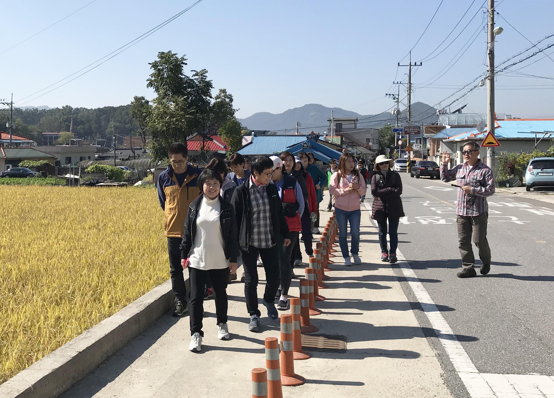 충청북도 옥천 읍내의 황금빛 들판을 옆에 두고 걷기 시작하는 참가자들.