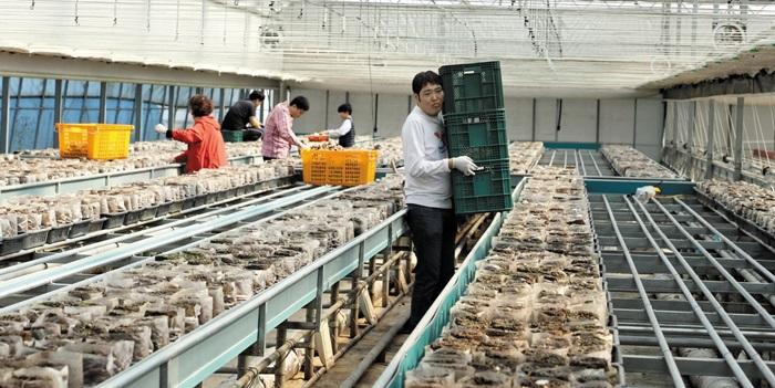 발달장애 청년들이 경기도 여주의 한 스마트팜에서 버섯 재배를 체험 중이다./푸르메재단 제공