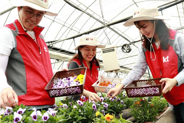 시설하우스 안에서 꽃잎을 따고 있는 자원봉사자들