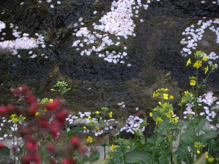 ▲ 제비꽃, 유채꽃 등 봄꽃들로 물든 여좌천