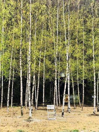조차장을 나오면 펼쳐진 자작나무 숲