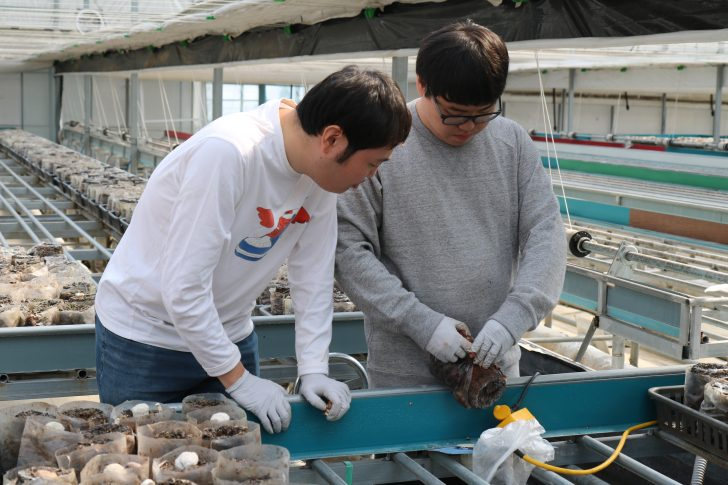 동료에게 버섯 따는 비법을 전수하는 장애인 직원.